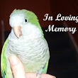 Grieving Your Bird's Passing – Paco Parrot's Blog