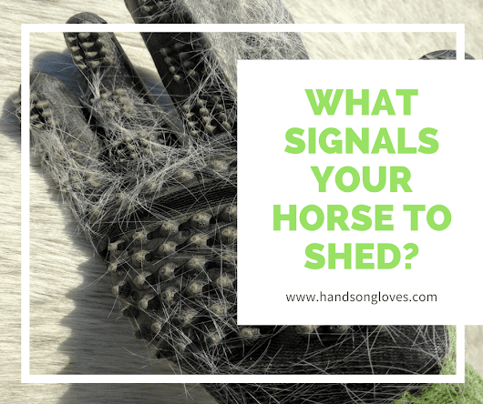The start of winter tells your horse to start shedding! - HandsOn