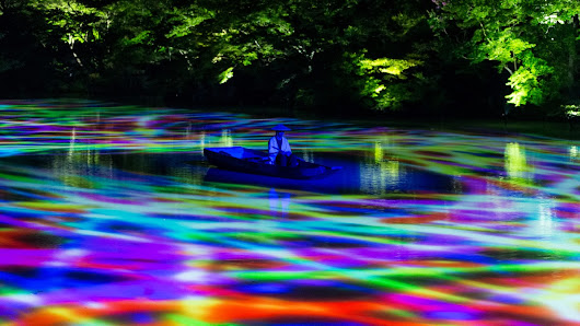 50,000 Lights Turn a Giant Japanese Forest into a Glowing Wonderland