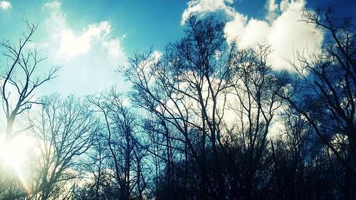 Bare Trees & Blue Skies