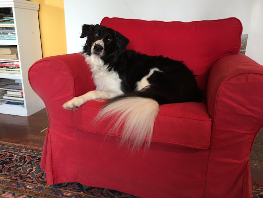 "Dri-Way.ca on Twitter: ""Alia supervised the cleaning of her living room rug... until it was time to clean her favourite chair. No more sneaking up for you, pup! """