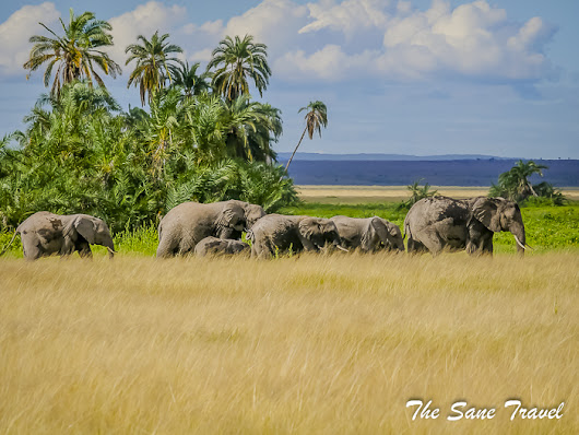 7 reasons to visit the Amboseli National Park, Kenya