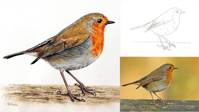 Udemy Free For Limited Time - How to Paint a Realistic Robin Bird in Watercolour