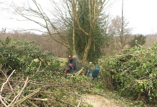 DSC_5718 tree felling