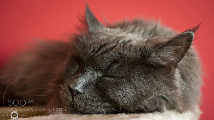 *Tschuna asleep* by Nico Frische (Blende2punkt8)) on 500px.com