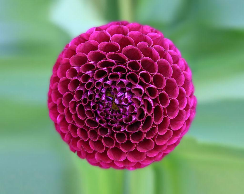 25 Fotografias de plantas para os amantes da matemática 10