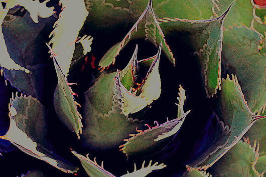 painted cactus II by Diane montana Jansson