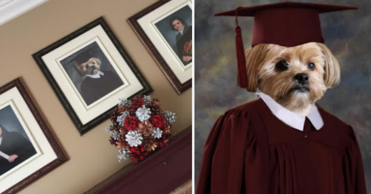 Dog Gets Very Own Graduation Picture So He Doesn't Feel Left Out - The Dodo