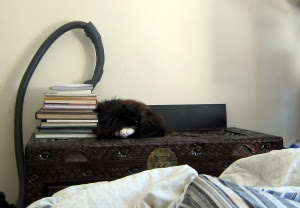 cat-book-guard