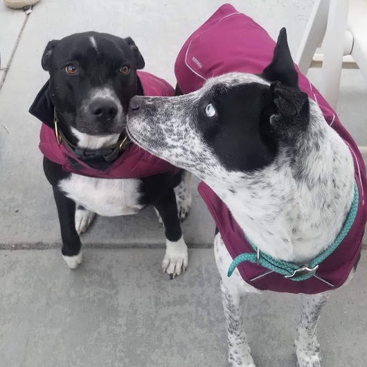 Winter Wear Dogs Will Love - PetsWeekly.com