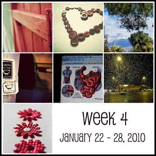 Week 4  (365:2010)