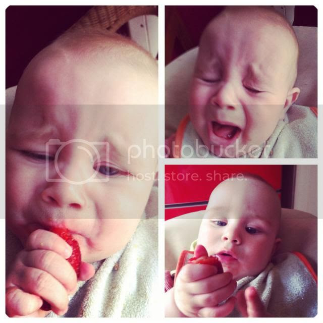 Erdbeer-Wutz