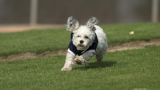 UofF: Increase in deadly disease transferable to humans by dogs - Tampa Bay Business Journal