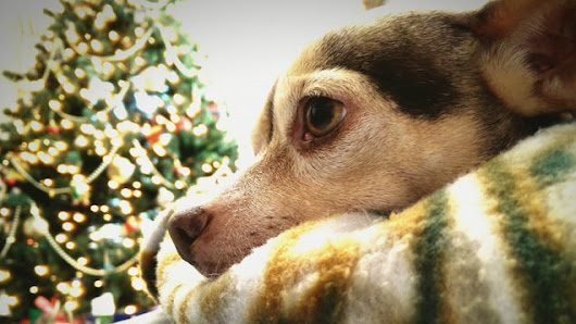 PSA: Keep Pets Away from Christmas Tree Water