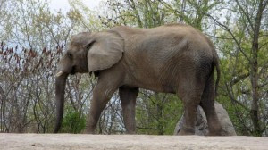 toronto-zoo-elephants-20130705