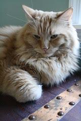 Jasper on the cedar chest
