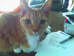 toby the programmer kitty