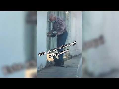 Anciano va todos los días a una casa abandonada para darle agua y comida a gato abandonado
