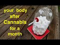 Esto es lo que sucede con tus pulmones cuando fumas marihuana