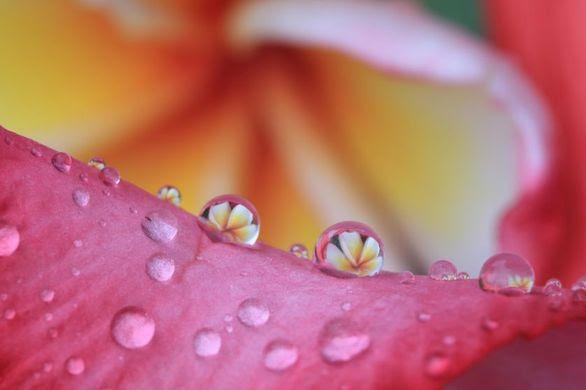 Όταν η φύση… ζωγραφίζει με σταγόνες βροχής! (pics)