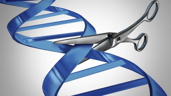 La bioética de la edición genética de la línea germinal. Sus beneficios son reducidos y los riesgos incalculables afectando a la especie irreversiblemente.