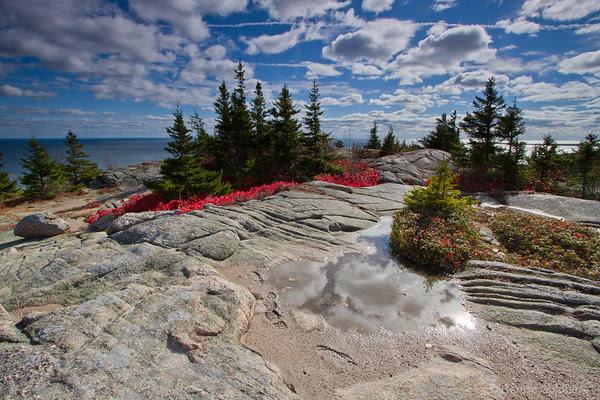 reds decorate evergreens high on Gorham Mountain