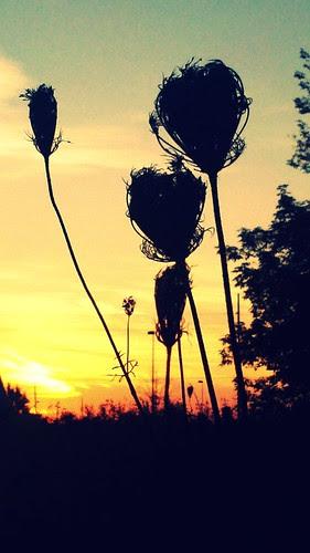 Sunrise & Silhouettes.4