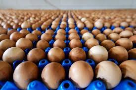 1106-huevos.jpg