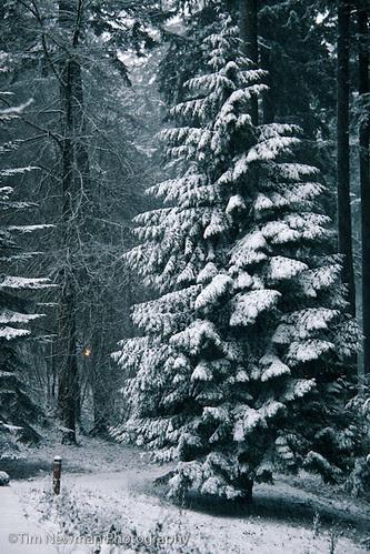 Snow in Portland?