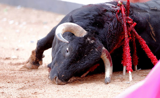 PETITION: End Barbaric Bull Fighting in Spain
