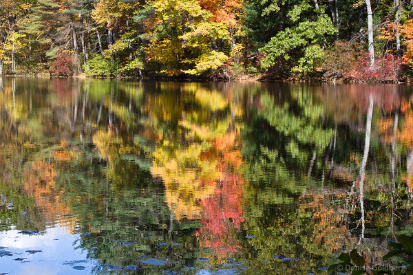 autumn leaves, reflections