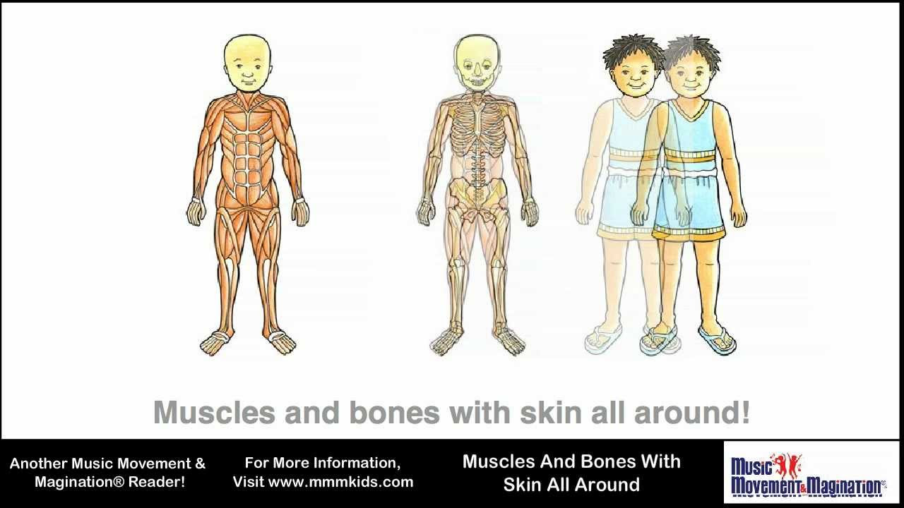 Muscles And Bones With Skin All Around - YouTube