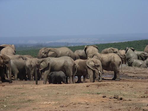 Sydafrika feb 2007 201