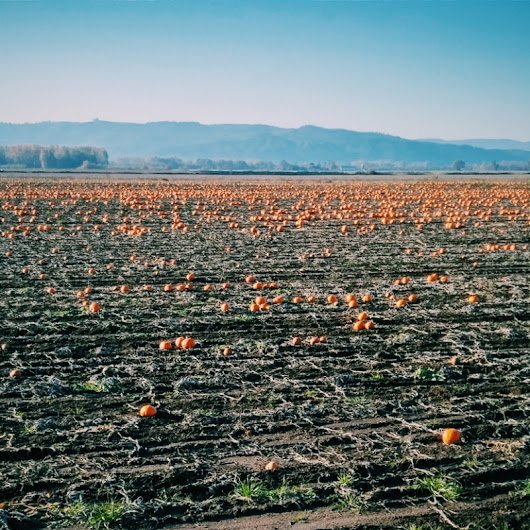 The abundance remains after Halloween  | Jason Lucey | VSCO Grid®