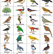 Birds Name Chart
