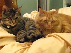 Maggie snuggling with Jasper