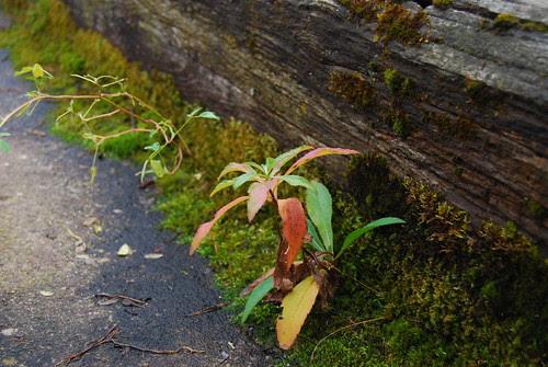 Mossy Weeds