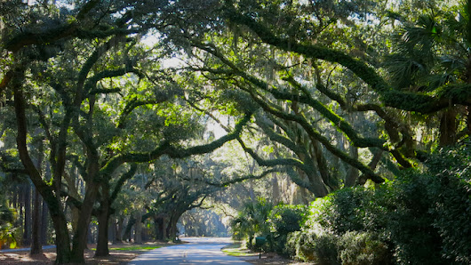Top 5 Reasons Why Spring is the Best Season to Visit Hilton Head  | Vacation Homes of Hilton Head