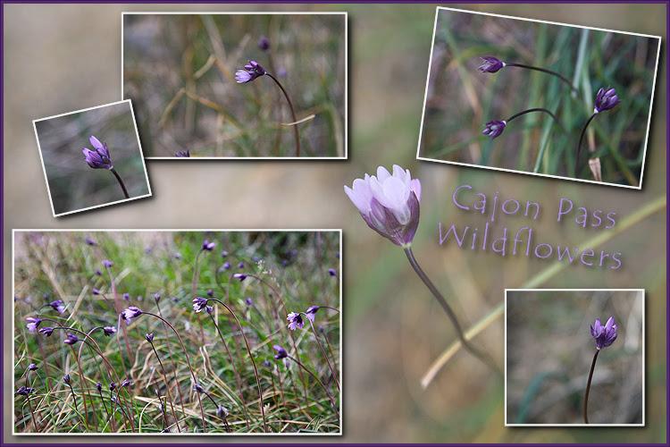 cajon pass wildflowers-000001