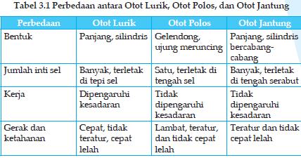 Cara Kerja Otot Polos Otot Lurik Otot Jantung - Info ...