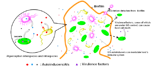 Biofilm, Bacterial Density, Quorum Sensing, Autoinducers | Advanced Healing