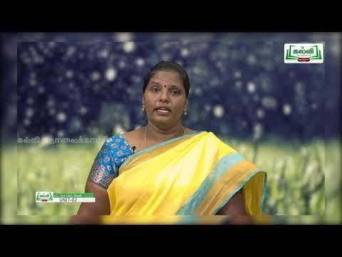 12th Tamil இயல் 2 பகுதி 2 உரைநடை பெருமழைக்காலம் Kalvi TV