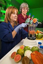 Holly Sisson y Elizabeth Baldwin usan una batidora para homogeneizar rebanadas de guayaba fresca. Enlace a la información en inglés sobre la foto