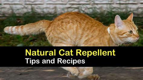 cat repellents natural gagsbuzz