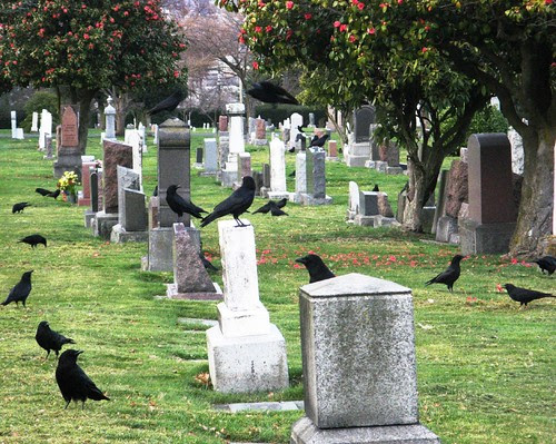 crows and stones