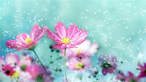 flower wallpapers  wallpapers