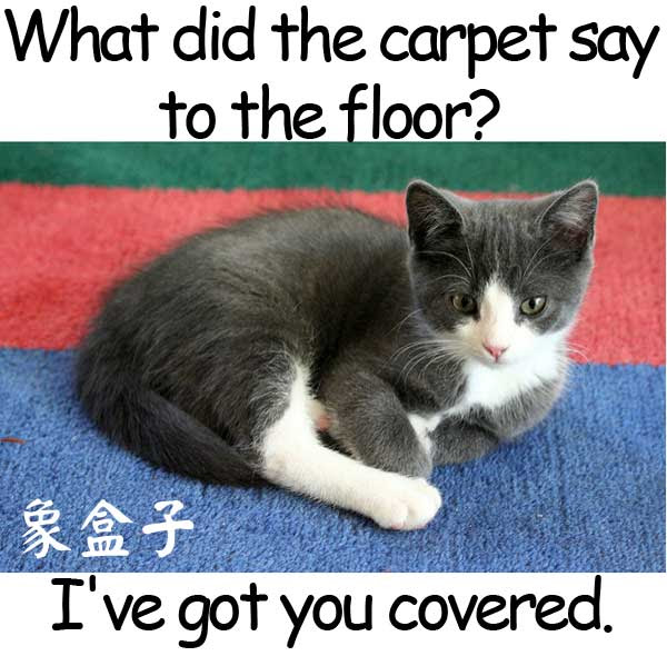 capet floor have got you covered