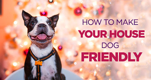 Effective Tips on How to Make Your House Dog Friendly