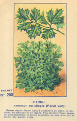 legume208 persil