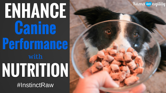 How to Enhance Canine Performance with Nutrition #InstinctRaw